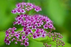 Flores bonitas para cartões e cumprimentos Imagem de Stock