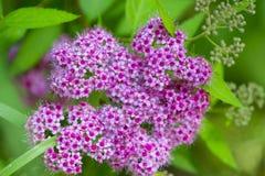 Flores bonitas para cartões e cumprimentos Foto de Stock Royalty Free