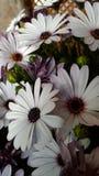Flores bonitas pequenas Foto de Stock Royalty Free