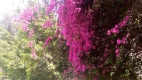 Flores bonitas que florescem sob o Sun, tipos diferentes da mola de flores Foto de Stock Royalty Free
