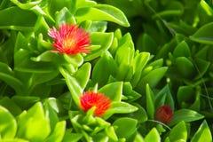 Flores bonitas que florescem sob o Sun, tipos diferentes da mola de flores Fotografia de Stock Royalty Free