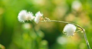 Flores bonitas que florescem sob o Sun, tipos diferentes da mola de flores Fotos de Stock Royalty Free