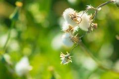 Flores bonitas que florescem sob o Sun, tipos diferentes da mola de flores Imagem de Stock