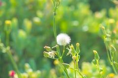 Flores bonitas que florescem sob o Sun, tipos diferentes da mola de flores Fotografia de Stock