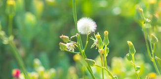 Flores bonitas que florescem sob o Sun, tipos diferentes da mola de flores Imagens de Stock Royalty Free