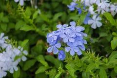 Flores bonitas que florescem sob o Sun, tipos diferentes da mola de flores Imagens de Stock