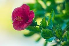 Flores bonitas que florescem sob o Sun, tipos diferentes da mola de flores Foto de Stock