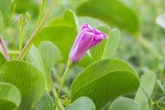 Flores bonitas que florescem sob o Sun, tipos diferentes da mola de flores Fotos de Stock