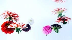 Flores bonitas sob a água Imagem de Stock