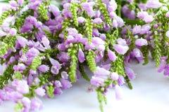 Flores bonitas - um ramalhete do speedwell Imagem de Stock Royalty Free