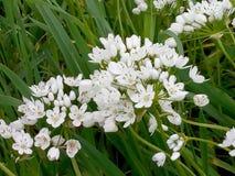 Flores bonitos brancas bonitas: tempo de mola! Fotos de Stock
