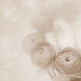 Flores borradas do sepia flores bonitas foto de stock