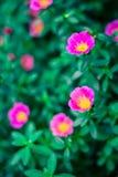 Flores borrosas frescas del fondo del fondo de la primavera Imágenes de archivo libres de regalías