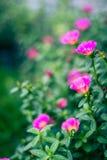 Flores borrosas frescas del fondo del fondo de la primavera Fotos de archivo libres de regalías