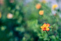 Flores borrosas frescas del fondo del fondo de la primavera Fotografía de archivo libre de regalías