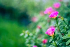 Flores borrosas frescas del fondo del fondo de la primavera Imagen de archivo libre de regalías
