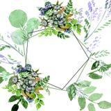 Flores botánicas florales del ramo suculento Sistema del ejemplo del fondo de la acuarela Cuadrado del ornamento de la frontera d libre illustration