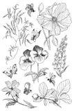 Flores botânicas da flor da ilustração do vintage ajustadas Flor Fotos de Stock Royalty Free
