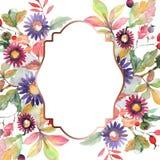 Flores botânicas do ramalhete do áster e do wildflower Grupo da ilustra??o do fundo da aquarela Quadrado do ornamento da beira do ilustração royalty free