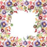 Flores botânicas do ramalhete do áster e do wildflower Grupo da ilustra??o do fundo da aquarela Quadrado do ornamento da beira do ilustração do vetor