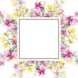 Flores botânicas dos lillies amarelos e roxos Grupo da ilustração do fundo da aquarela Quadrado do ornamento da beira do quadro ilustração stock