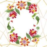 Flores botânicas florais do Lantana vermelho Grupo da ilustra??o do fundo da aquarela Quadrado do ornamento da beira do quadro ilustração stock