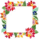 Flores botânicas florais do Lantana vermelho Grupo da ilustra??o do fundo da aquarela Quadrado do ornamento da beira do quadro fotos de stock royalty free