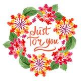Flores botânicas florais do Lantana vermelho Grupo da ilustra??o do fundo da aquarela Quadrado do ornamento da beira do quadro imagem de stock