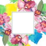 Flores botânicas florais do ramalhete cor-de-rosa da orquídea Grupo da ilustra??o do fundo da aquarela Quadrado do ornamento da b ilustração royalty free