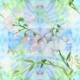 Flores, botões, ramos da ervilha doce Composição decorativa em um fundo da aquarela watercolor Motivos florais Patte sem emenda Fotografia de Stock Royalty Free