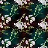 Flores, botões, ramos da ervilha doce Composição decorativa em um fundo da aquarela watercolor Motivos florais Patte sem emenda Fotografia de Stock