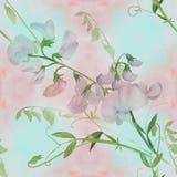 Flores, botões, ramos da ervilha doce Composição decorativa em um fundo da aquarela watercolor Motivos florais Patte sem emenda Fotos de Stock Royalty Free