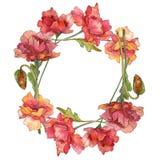 Flores bot?nicas florais da papoila vermelha Grupo da ilustra??o do fundo da aquarela Quadrado do ornamento da beira do quadro ilustração stock