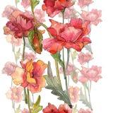 Flores bot?nicas florais da papoila vermelha Grupo da ilustra??o do fundo da aquarela Quadrado do ornamento da beira do quadro fotografia de stock royalty free