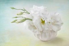 Flores brancas fotografia de stock