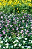 Flores brancas, amarelas, cor-de-rosa Foto de Stock Royalty Free