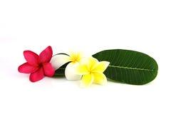 Flores brancas, amarelas e cor-de-rosa com folhas verdes. Fotos de Stock
