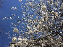 Flores brancas bonitas Imagens de Stock