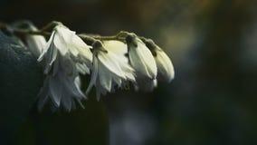 Flores brancas bonitas Foto de Stock Royalty Free