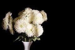 Flores brancas bonitas no vaso no fundo preto Fotografia de Stock