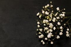 Flores brancas bonitas pequenas Imagens de Stock
