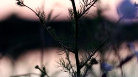 Flores brancas bonitas perto do rio na noite Movimento lento do ` s da câmera filme