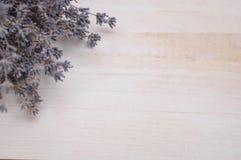 Flores brancas da alfazema vistas perto acima Imagem de Stock Royalty Free