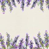 Flores brancas da alfazema vistas perto acima Beira da aquarela ilustração royalty free