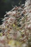 Flores brancas da clematite foto de stock