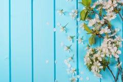 Flores brancas da flor em fundos de madeira azuis Fotografia de Stock Royalty Free