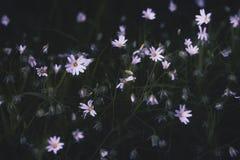 Flores brancas da floresta Imagens de Stock Royalty Free