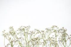 Flores brancas da mistura e folhas do verde imagem de stock
