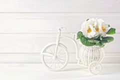 Flores brancas da mola Imagens de Stock Royalty Free