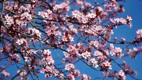 Flores brancas da mola Fotos de Stock Royalty Free